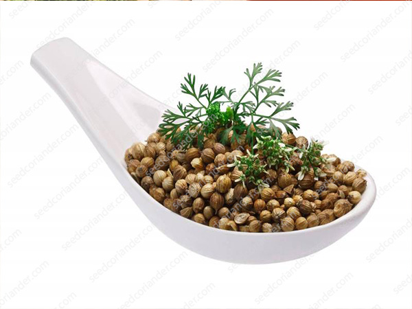 coriander seeds price in tamil