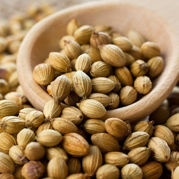 coriander seeds suppliers & price today in india