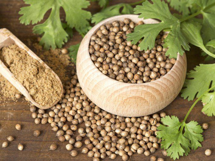 Coriander seeds price today for UK exporters