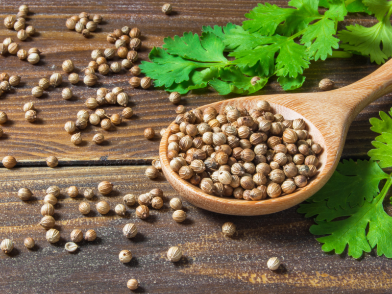 Coriander seeds Suppliers in India