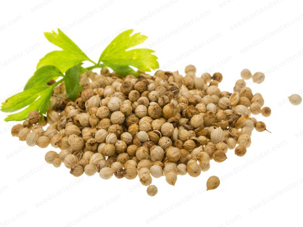 coriander seed price today & future trends 2019