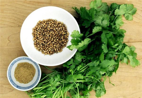 coriander price south africa & market for coriander in kenyay